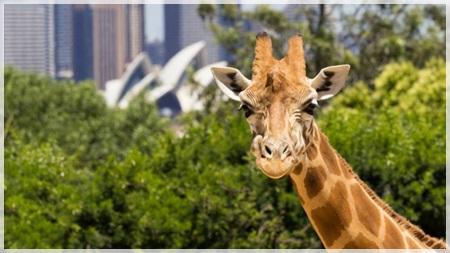 将来を語りやすい動物園デート