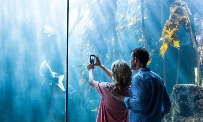 水族館デートの魅力とは!初デート・マンネリ化にはオススメ